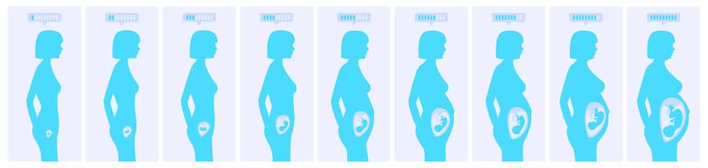 evo-embarazo-1